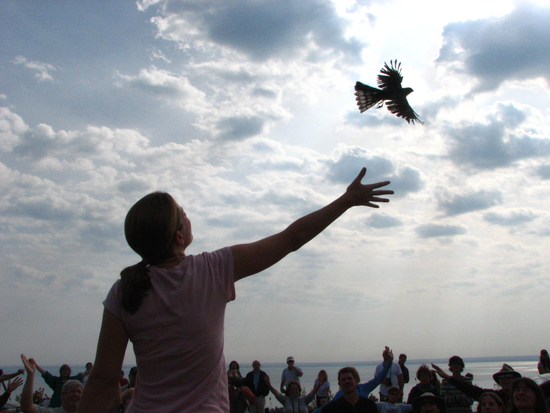 People connect with live birds at Hawk Ridge. They learn about birds first, then bird habitat, followed by the web that connects all of nature, including people. And when they get excited, they act in ways that care for the web of all life -- people and nature.